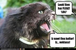 Look! Ben haz FLEAZ! *LOL!*