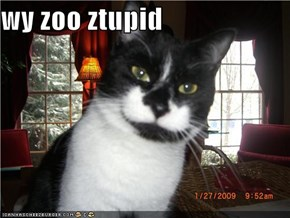 wy zoo ztupid