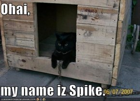 Ohai,  my name iz Spike.