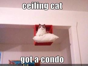 ceiling cat   got a condo