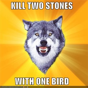 KILL TWO STONES  WITH ONE BIRD