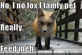 No, I no fox.I famly pet Really. Feed meh.