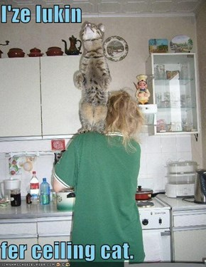 I'ze lukin  fer ceiling cat.