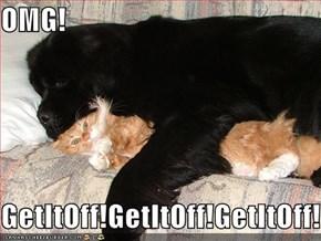 OMG!  GetItOff!GetItOff!GetItOff!