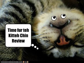 Time fur teh Kitteh Chin Review