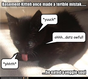 Basement Kitteh once made a terible mistak......