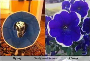 My Dog Totally Looks Like A Flower