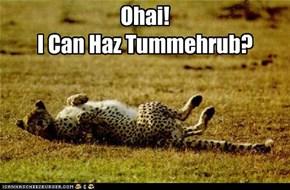 Ohai! I Can Haz Tummehrub?