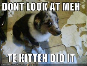 DONT LOOK AT MEH  TE KITTEH DID IT