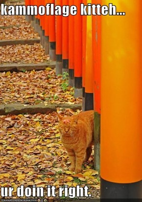 kammoflage kitteh...  ur doin it right.