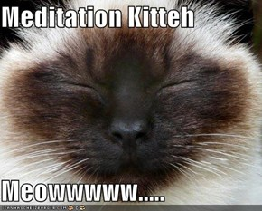 Meditation Kitteh  Meowwwww.....
