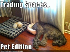 Trading Spaces..  Pet Edition