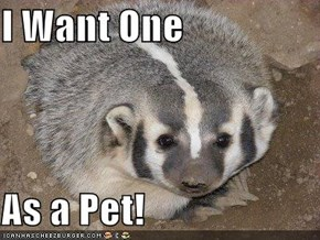 I Want One  As a Pet!