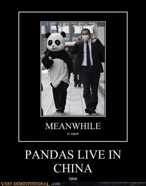 PANDAS LIVE IN CHINA
