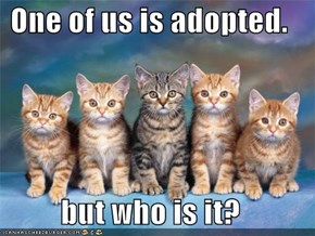One of us is adopted.  but who is it?