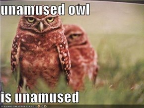 unamused owl  is unamused