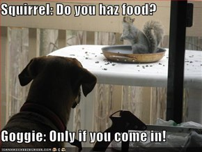 Squirrel: Do you haz food?  Goggie: Only if you come in!
