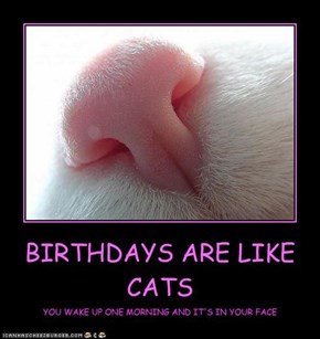 BIRTHDAYS ARE LIKE CATS