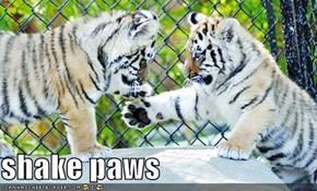 shake paws