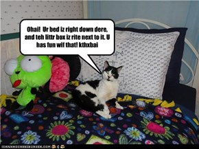 Kitteh steals bed!!!