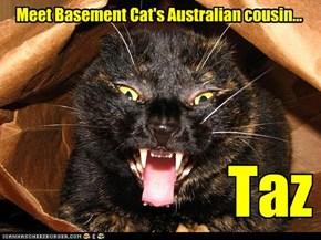 Basement Cat's uther cuzzin