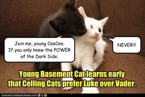 Young Basement Cat learns early that Celling Cats prefer Luke over Vader.