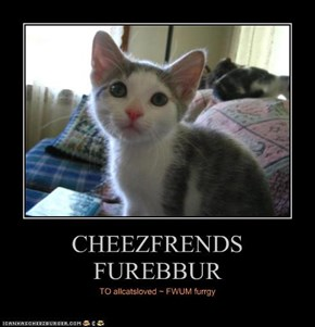 CHEEZFRENDS FUREBBUR