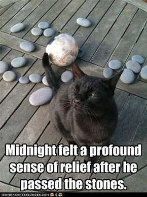 #$#^&$* Meow that hurt!