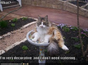 What?  I'm very decorative, and I don't need watering...