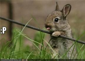 Easturr Bunny