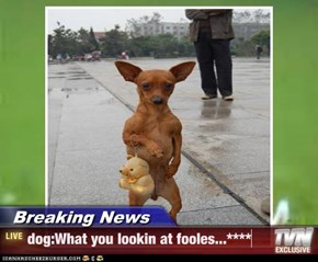 Breaking News - dog:What you lookin at fooles...****