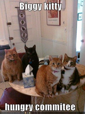 Biggy kitty  hungry commitee