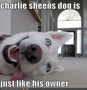 charlie sheens dog is  just like his owner