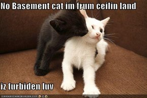No Basement cat im frum ceilin land  iz furbiden luv
