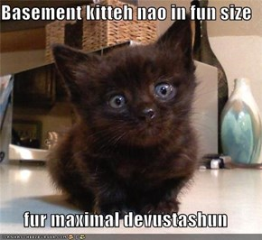 Basement kitteh nao in fun size  fur maximal devustashun