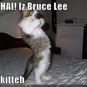 HAI! Iz Bruce Lee  kitteh