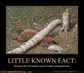 LITTLE KNOWN FACT: