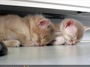 A Quick Cat Nap For These Snooze Brothers