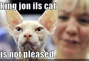 king jon ils cat  is not pleased