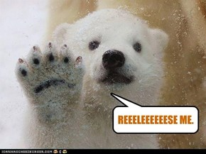 Independence day Polar bear say...