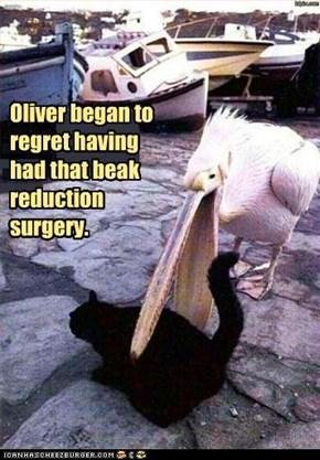 Oliver began to regret having had that beak reduction surgery.