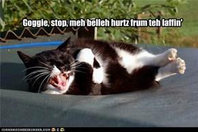 Goggie, stop, meh belleh hurtz frum teh laffin'