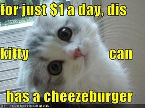 for just $1 a day, dis kitty                           can   has a cheezeburger