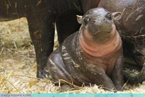 Happy Happy Hippo!