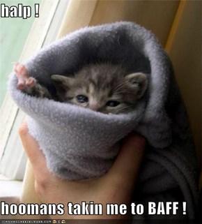 halp !          hoomans takin me to BAFF !