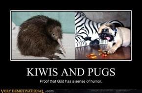 KIWIS AND PUGS