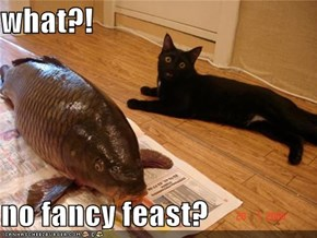 what?!  no fancy feast?