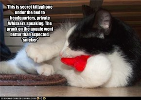 Secret kitteh-phone