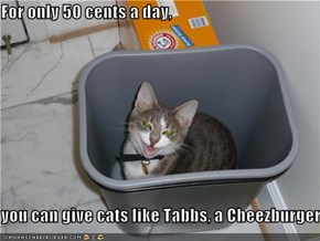 For only 50 cents a day,  you can give cats like Tabbs, a Cheezburger