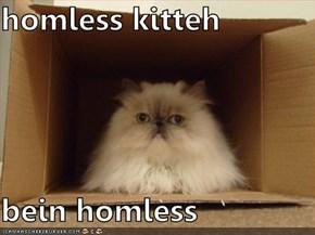 homless kitteh  bein homless